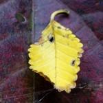 Teeny, tiny leaf on leaf.