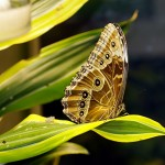 End with small things: butterflies.