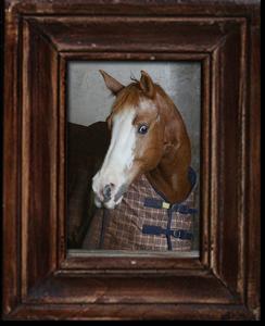 Sugar_horse