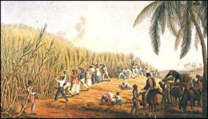 sugar_plantation
